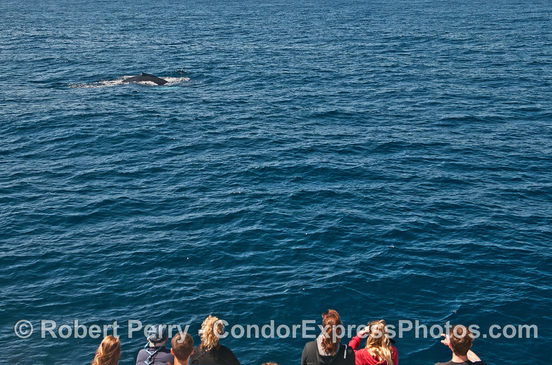 A humpback whale pays a visit to its fan club
