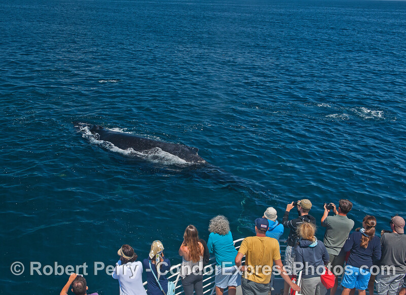 A friendly humpback whale makes new friends.