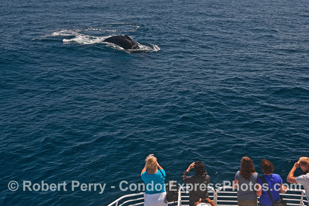 Whale fans get a great look at a friendly humpback whale.