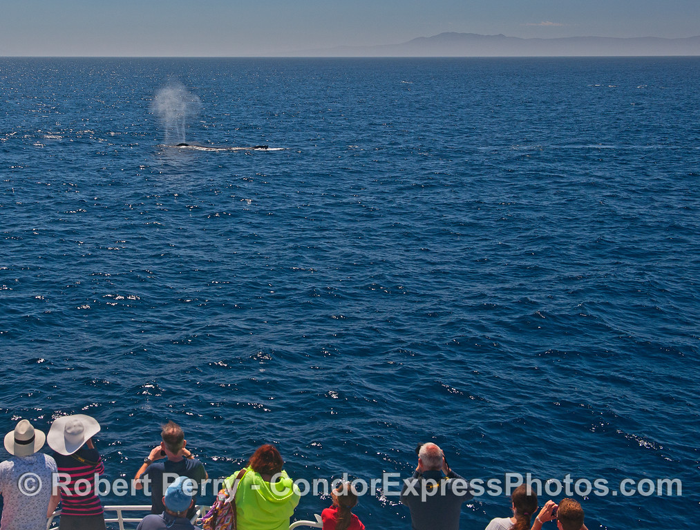 Whale fans get a close look at a friendly humpback whale.
