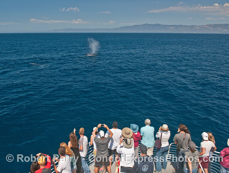 A bright sunny day with blue water and whale fans getting a good look at a humpback whale.