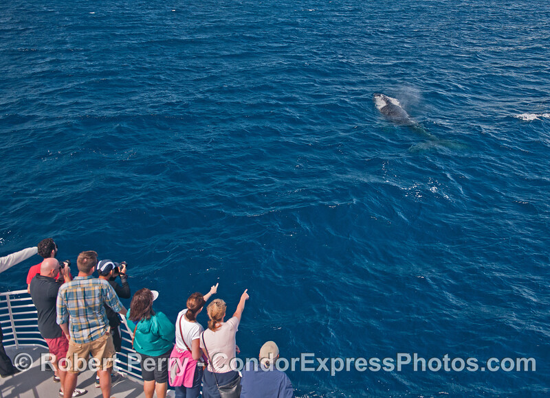 Humpback whale close to the boat.