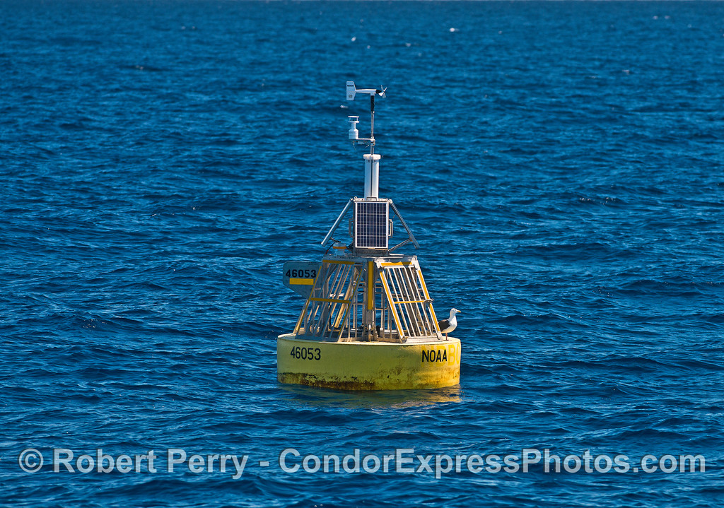 "East Channel NOAA oceanographic buoy, often called the ""mid-channel"" buoy"