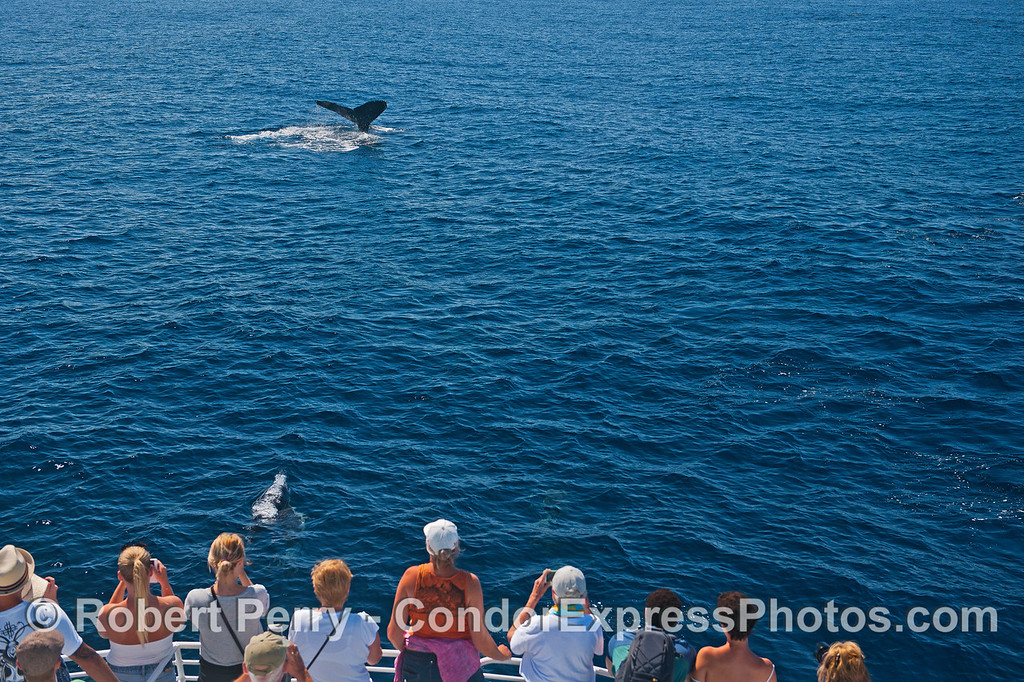 People get a good look at a tail fluke of a humpback whale