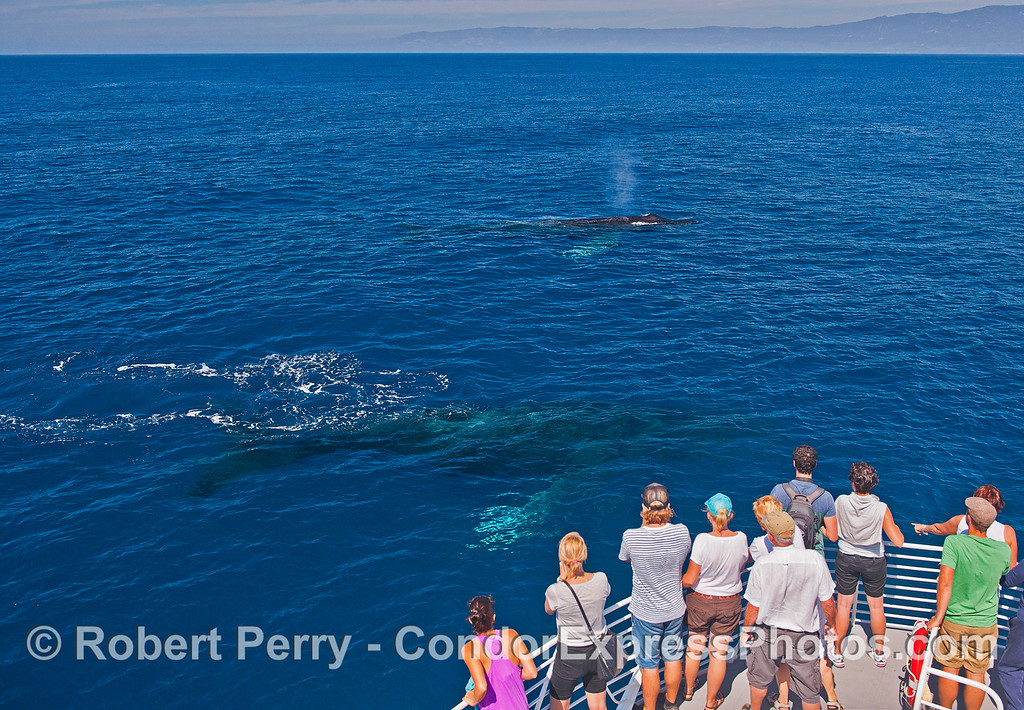 Very close approach by 2 curious humpback whales.