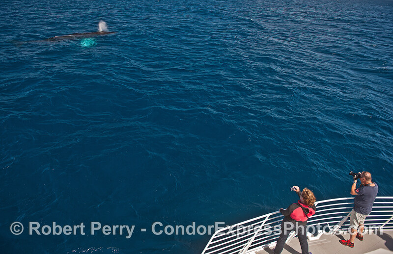 Two photographers and a friendly humpback.
