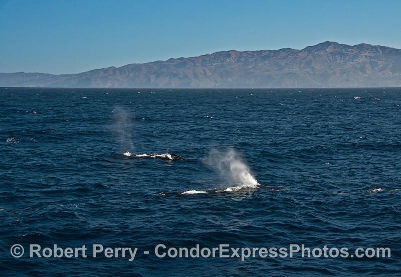 Beautiful Santa Cruz Island and a couple of humpback whale spouts.