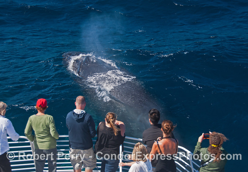 You'll never get a closer look at a humpback whale than these very friendly beasts today.