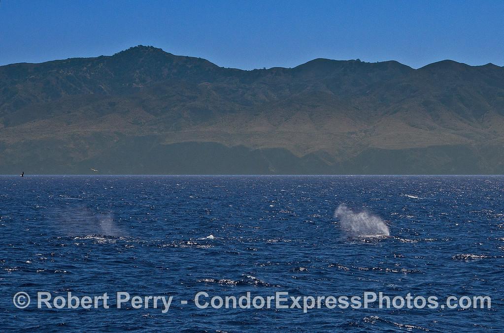 Spouts and Santa Cruz Island.