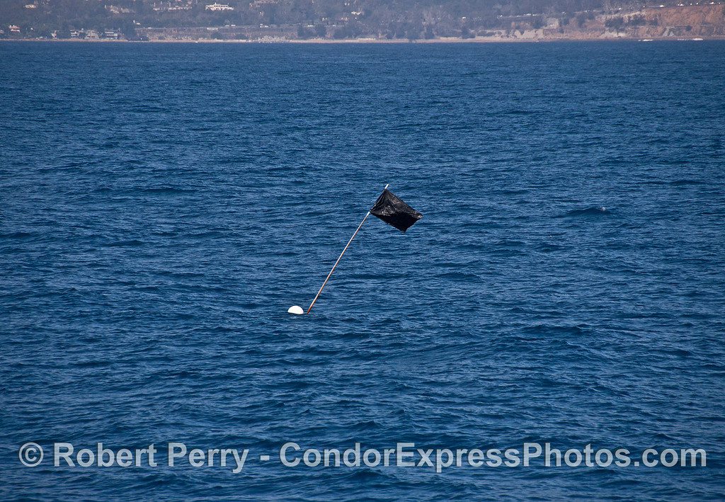 """The tall """"high flyer"""" marking flag is attached to one end of some submerged commercial fishing gear."""