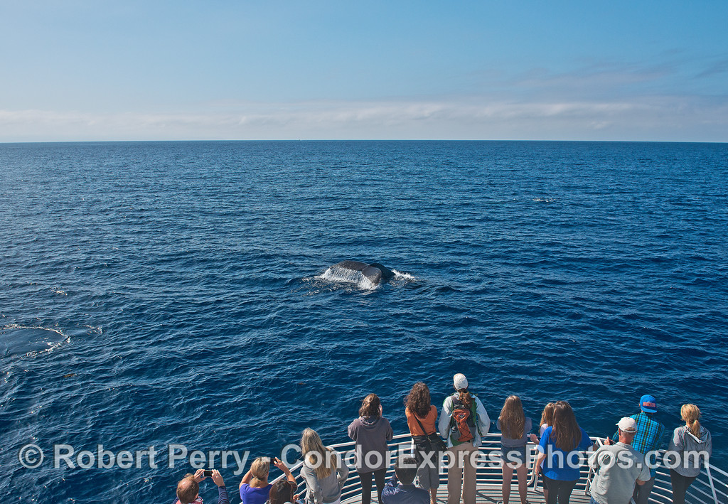 A very friendly humpback whale and its fan club