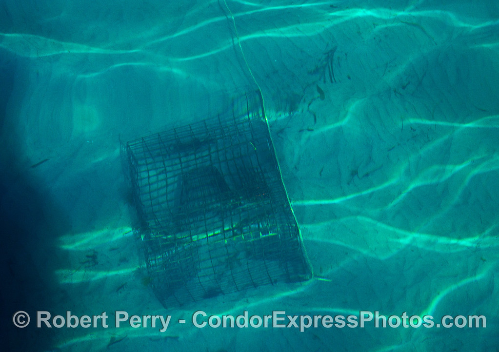 Lobster trap on ocean floor