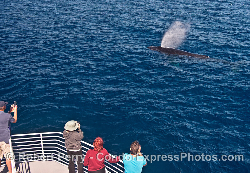 Great close looks at a spouting humpback whale