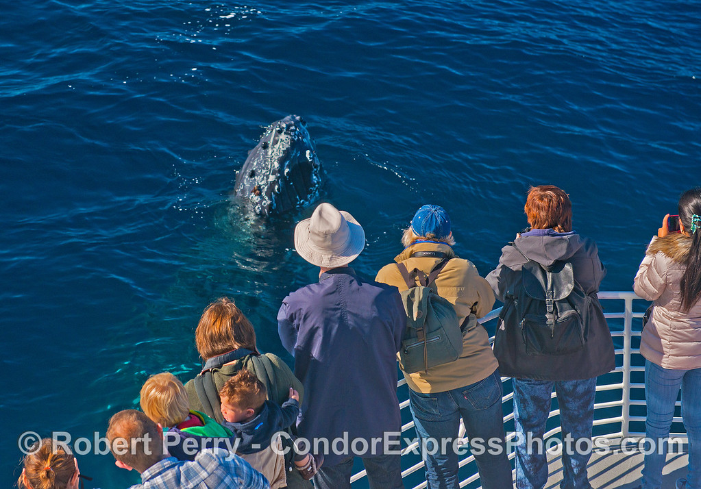 Whale fans go eye to eye with a humpback.