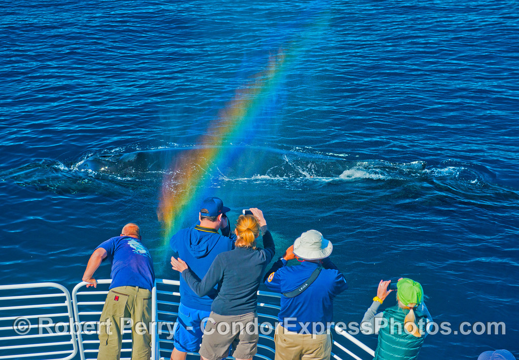 A spouting whale sends spray over the bow of the boat and catches the sun to create a nice rainbow.