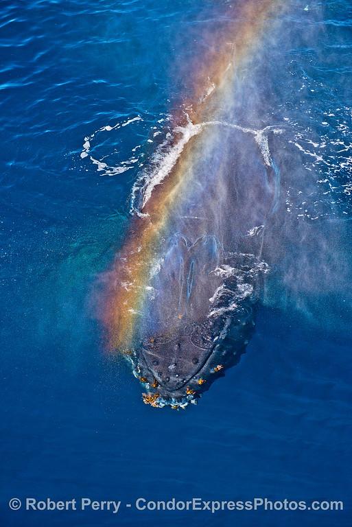 Rainbow spout.