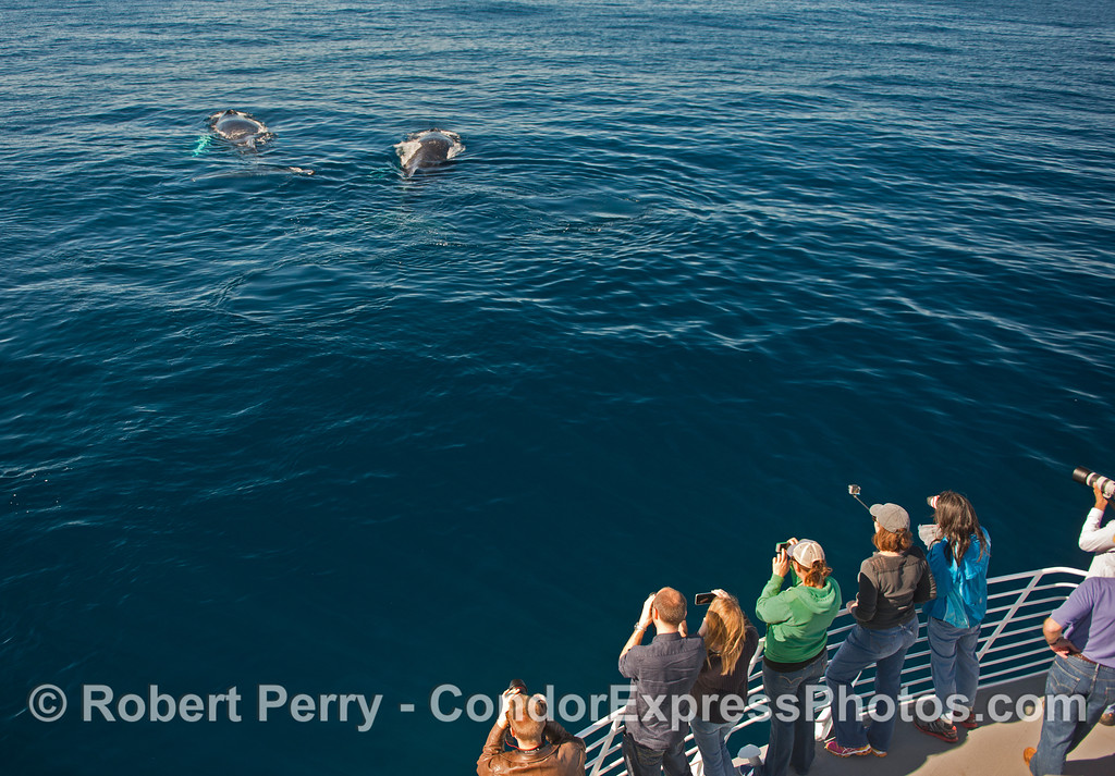 Whale lovers get a close look at a pair of humpbacks.