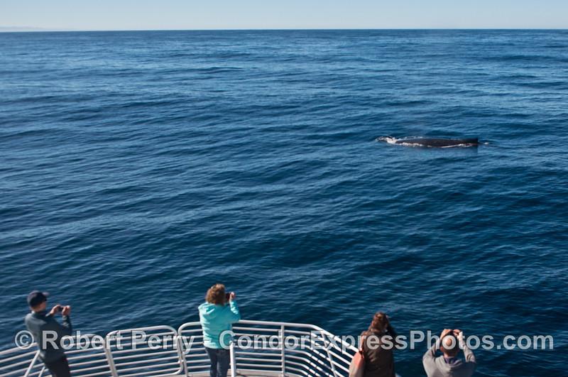 Friendly humpback whale