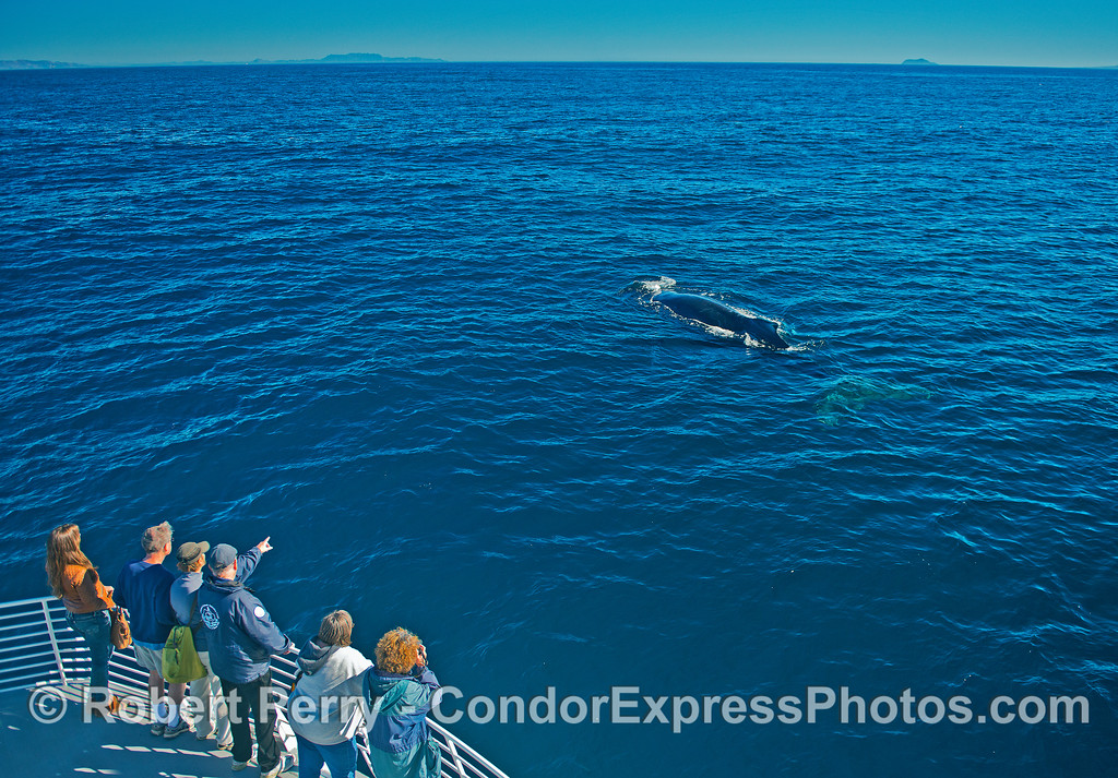 Friendly humpback whale and its fan club.  CINC naturalist Hal points the way.  From left to right, the background topography includes the eastern terminus of the Santa Ynez moutains in west Ventura, Bony Ridge between Camarillo and Malibu, and tiny west Anacapa Island.