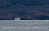 """False spouts"" along the sea cliffs of Santa Cruz Island.  A large northwest swell kicks up some spray."