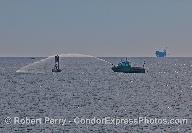 Santa Barbara Harbor Patrol boat washes down one of the harbor entrance buoys to make a cleaner habitat for California sea lions.