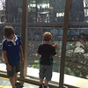 ... the glass floor is a bit scary