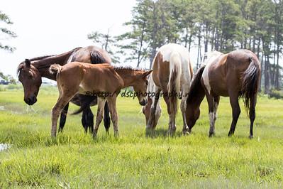America's Sweetheart's Foal