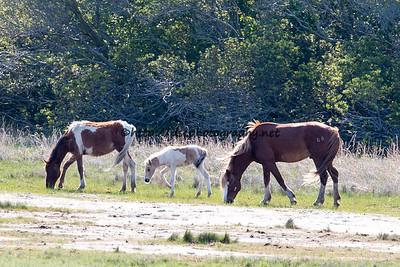 Jigsaw, Anne Bonny's Foal & Ken