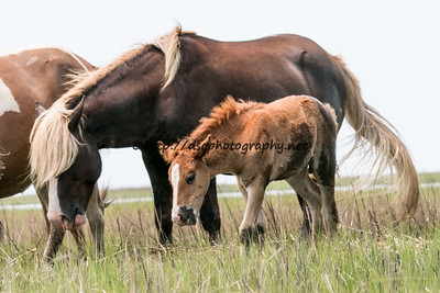 Riptide with Bay Girl's Foal