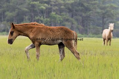 Bay Girl's Foal