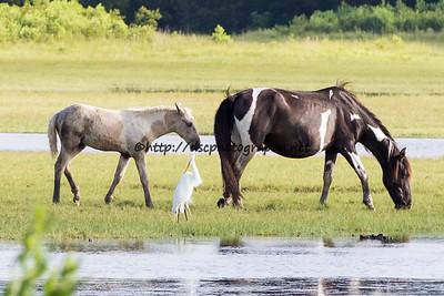 Baybe & Foal