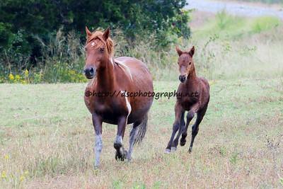 Cloudburst & Foal