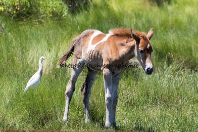 Dreamer's Gift's Foal