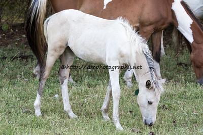 Badabing/Ella's 2015 Foal