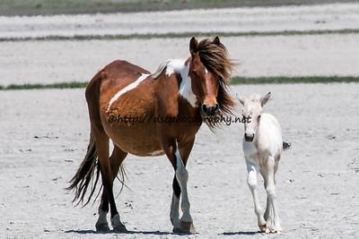 Ella & 2015 Foal