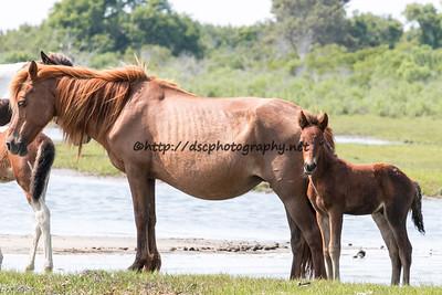 Isle Treasure & Foal