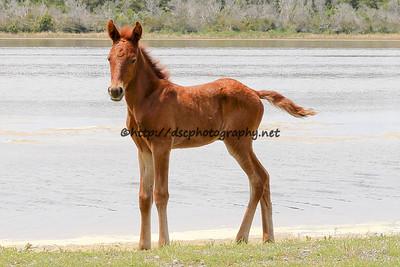 JABATTA's 2015 Foal