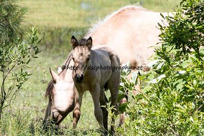 Jessica's Sandy's 2015 Foal