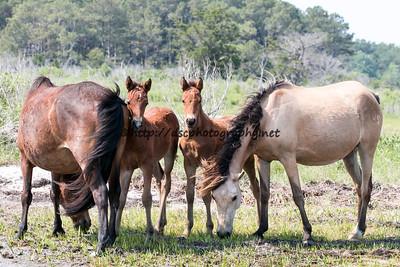 Daisey & Kachina's Foals