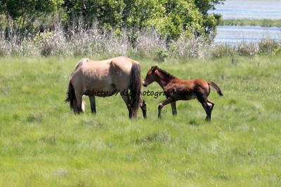 Kachina's 2015 Foal