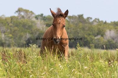 Kachina's Foal