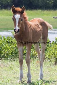 Lady Hook's Foal