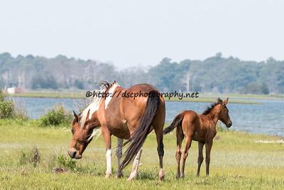 Little Freedom & Foal