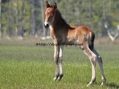 May's Grand Slam's 2015 Foal