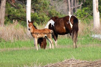 May's 2015 Foal