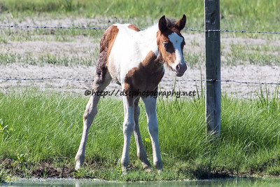 Miracle's Natural Beauty's Foal