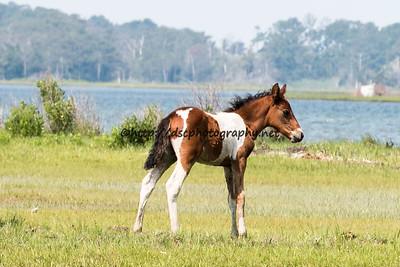 Seaside's Foal