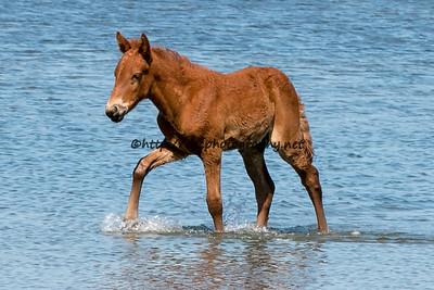 Shy Anne/Half N Half's 2015 Foal