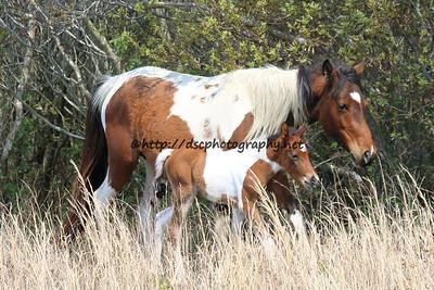 Skylark's 2015 Foal