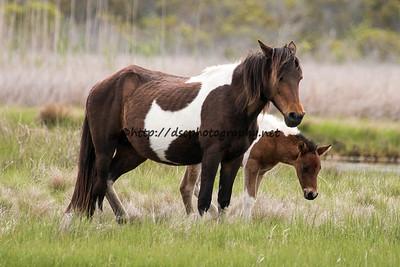 Summer Breeze's 2015 Foal